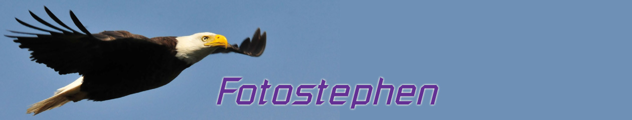 FotoStephen